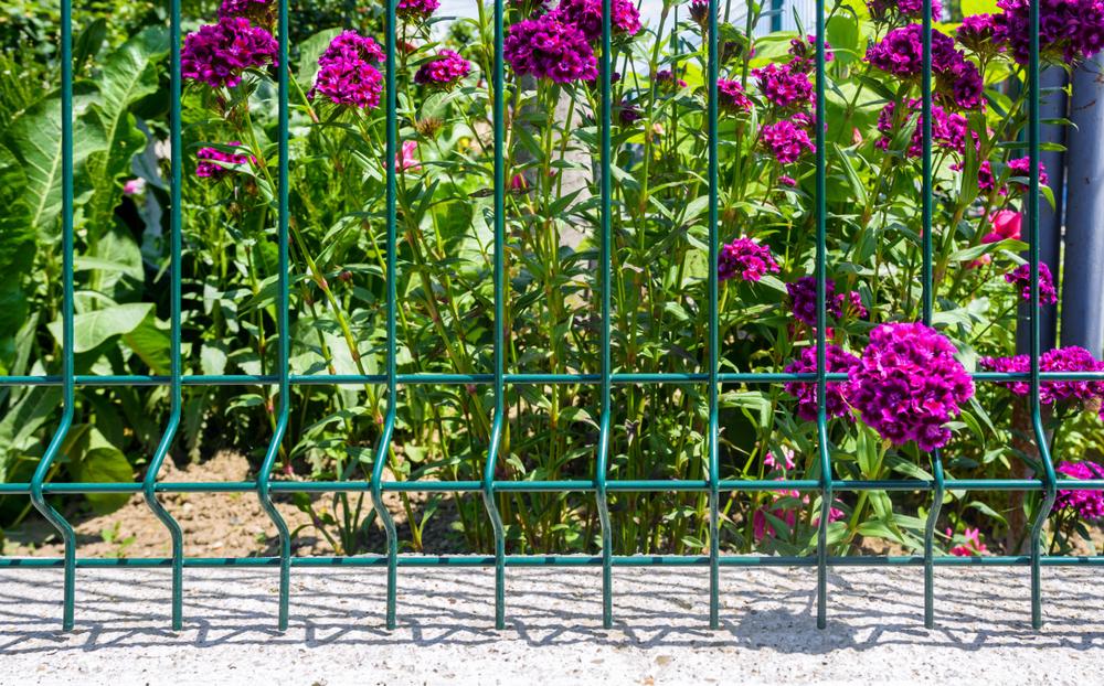Ogrodzenie panelowe - nasadzenia roślin - Expert-ogrodzenia.pl