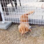 Jak zabezpieczyć psa w ogrodzie? Expert-Ogrodzenia.pl