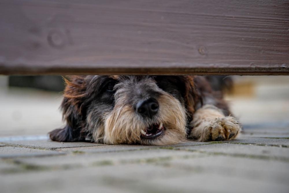 Jakie ogrodzenie wybrać przy psie? Expert-ogrodzenia.pl